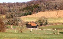 Un horizontal rural anglais avec du maïs de maturation Photos stock
