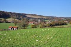 Un horizontal rural anglais avec frôler des moutons photographie stock