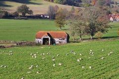 Un horizontal rural anglais avec frôler des moutons photos stock