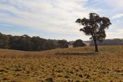 Un horizontal rural. NSW, Australie. images libres de droits
