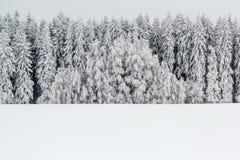 Un horizontal serein de l'hiver avec des arbres couverts dans la neige photographie stock libre de droits