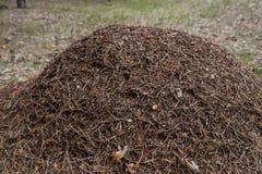 Un hormiguero grande en el bosque Imagen de archivo