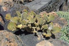 Un housein tipico l'isola di Lanzarote in isole Canarie Fotografie Stock Libere da Diritti