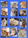 Un huelguista de la tarjeta de regalo de un cierto cat& x27; cara de s imagen de archivo libre de regalías