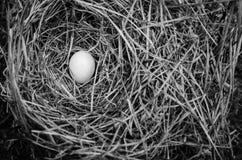 Un huevo blanco del pájaro en una jerarquía natural Imágenes de archivo libres de regalías