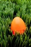 Un huevo de Pascua anaranjado en hierba verde Imagen de archivo libre de regalías