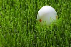 Un huevo de Pascua en hierba Imagenes de archivo