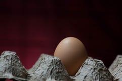 Un huevo en un cartón del huevo imagen de archivo