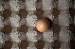 Un huevo en un cartón del huevo con las sombras que crean un modelo del control Foto de archivo