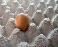 Un huevo en huevera Fotos de archivo