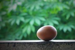 Un huevo en una pared Imágenes de archivo libres de regalías