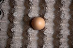 Un huevo solamente en un cartón del huevo fotografía de archivo libre de regalías