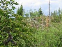 Un huracán potente con la raíz sacó árboles y arbustos Foto de archivo libre de regalías
