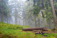 Un identifiez-vous la forêt de pin photographie stock