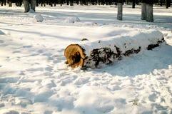 Un identifiez-vous la neige dans une forêt Images stock