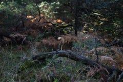 Un identifiez-vous les bois photo stock