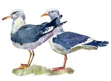 Un'illustrazione dell'acquerello di due gabbiani di mare diritti royalty illustrazione gratis