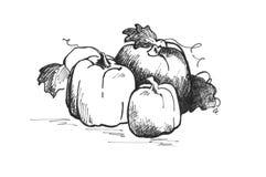 Un'illustrazione dell'inchiostro di tre zucche Fotografia Stock Libera da Diritti