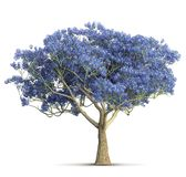 Un'illustrazione isolata albero viola 3D della fioritura della molla illustrazione vettoriale