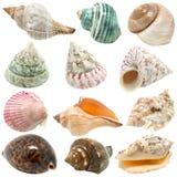 Un'immagine dei seashells su priorità bassa bianca Immagine Stock