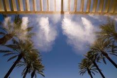 Un'immagine delle parti superiori delle palme Immagine Stock
