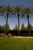 Un'immagine di tre alberi del plam Fotografia Stock Libera da Diritti