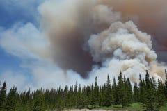 Un incendio forestal en un parque nacional imagenes de archivo