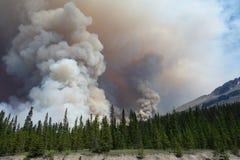 Un incendio forestale in un parco nazionale Fotografia Stock Libera da Diritti