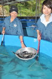 Un'incubazione dello storione sta presentanda agli agricoltori città del Lat nel lago lam di Tuyen, Da Fotografie Stock