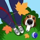 Un individuo, su perro y hojas de otoño Imagen de archivo