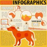 Un infographics de un perro stock de ilustración