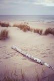 Un inicio de sesión del abedul las dunas de la playa Imagen de archivo libre de regalías