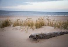 Un inicio de sesión del abedul las dunas de la playa Fotografía de archivo libre de regalías