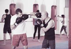 Un inscatolamento di due uomini dell'atleta Fotografie Stock Libere da Diritti