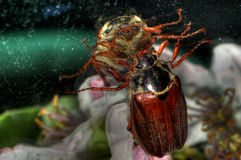 Un insecte Image stock