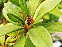 Un insecte dans le jardin Images stock