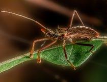 Un insecte de forêt tropicale Images stock