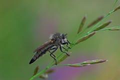 Un insecte intéressant Photo stock