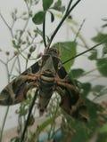 Un insecte sur l'arbre Photo stock