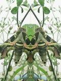 Un insecte sur l'arbre (effet de miror) Photo stock