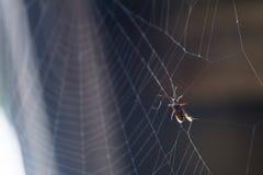 Un insecto atrapado en un web de araña Imágenes de archivo libres de regalías