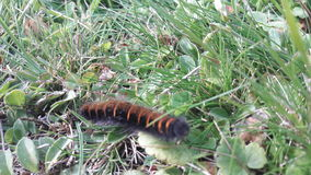 Un insecto coloreado abeja de la señora Foto de archivo libre de regalías