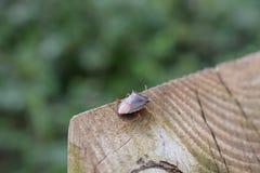 Un insecto del bosque en un poste indicador Imágenes de archivo libres de regalías