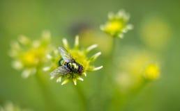 Un insecto en la hoja Imagen de archivo