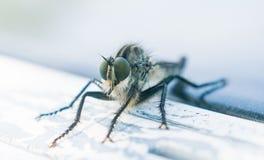 Un insecto muy extraño pero fotogénico foto de archivo