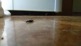 Un insecto negro Imagen de archivo libre de regalías