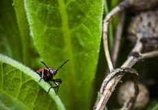 Un insetto fotografie stock