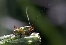 Un insetto Immagini Stock