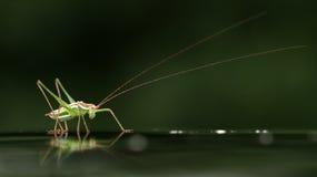 Un insetto Immagini Stock Libere da Diritti