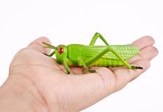 Un insetto di plastica della cavalletta del giocattolo della tenuta della mano fotografia stock libera da diritti